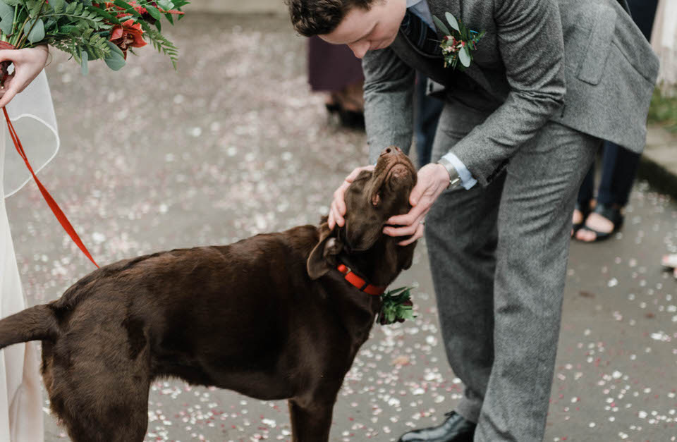 Groom stroking chocolate Labrador