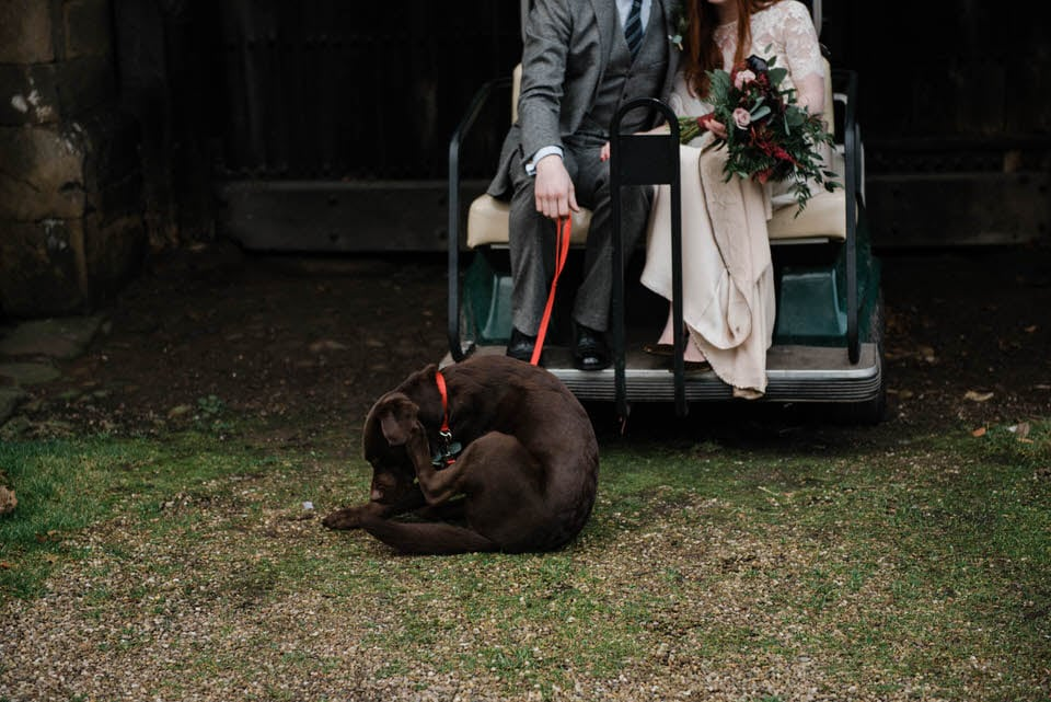 dog on lead sat on floor held by bride and groom