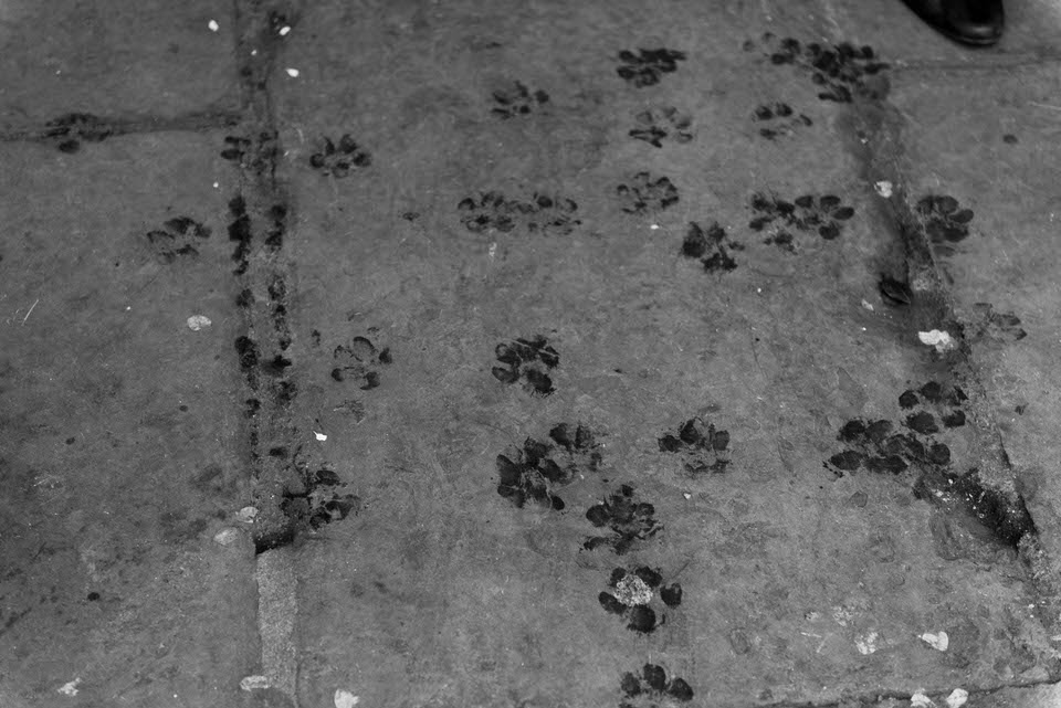paw prints from dog on ground